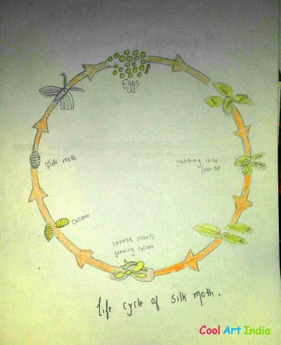 life cycle of silk moth